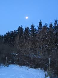 moon_over_conifers