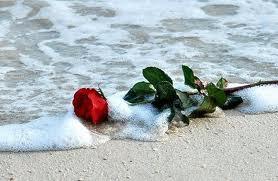 rose_on-the_beach