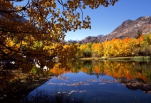 cali_autumn