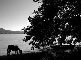 horse_boat_river_bank