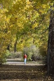 man_and_autumn