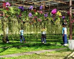 orchid_farm