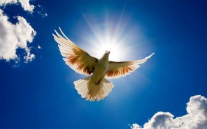 white_pigeon_flying