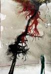 Cành cây chảy máu trong mùa Đông