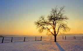 winter_sun