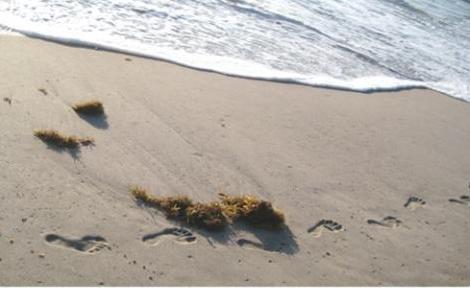 Dấu chân và con sóng