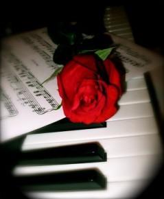 rose_on_piano_keyboard