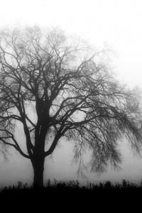 brisbane_winter