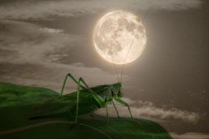 cricket_moon