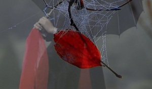 red_leaf_spider_web