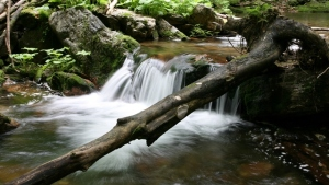 valey_of_bila_opava_river