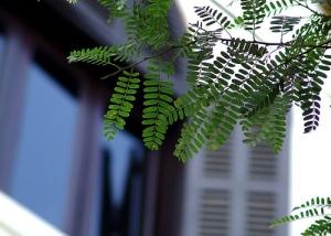 Đỗ Xuân Tê : Những con đường phủ lá me xanh