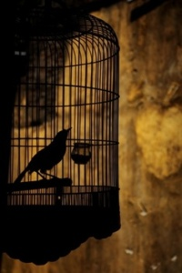 the_caged_bird