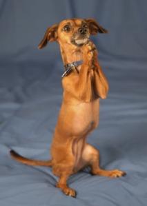 begging_dog