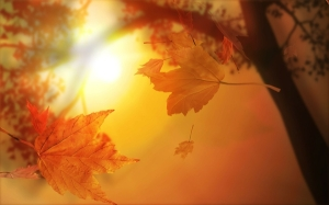 autumn_maple_leaf_leaves