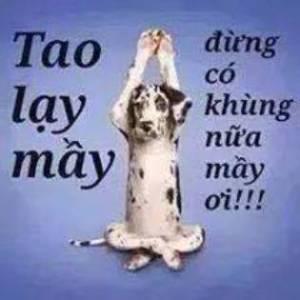 tao_lay_may