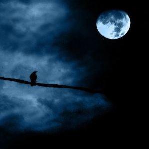 lonely_bird_in_moon_light