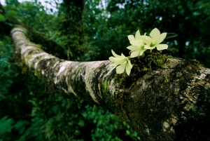orchid_in_forest