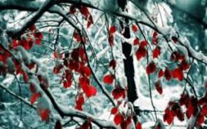 red_leaves-winter