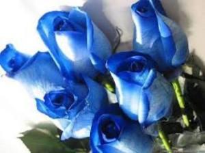 blue_roses