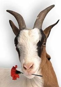 goat_flower