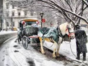 horse_carriage-winter