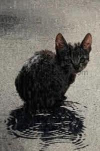 cat_in_the_rain