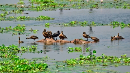 duck_lake