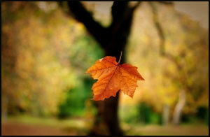 falling_leaf