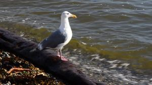 seagull_at_sea