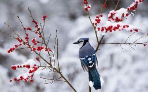snow_bird