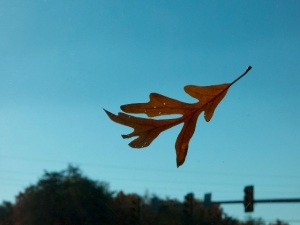 leaf_flying