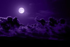 lavender_night