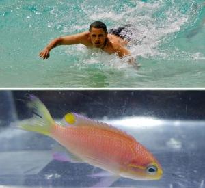 obama_fish