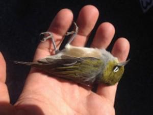 dead_bird