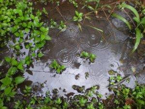 garden_rain