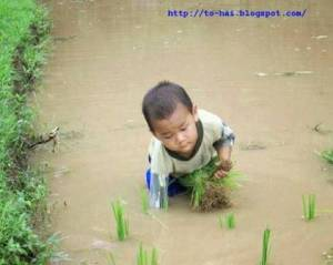 tre_tho_lam_ruong